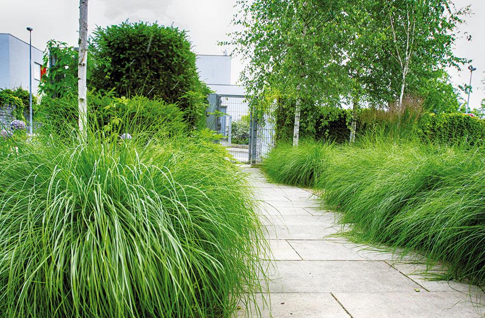 Záhradní architekti sa vrámci návrhu venovali aj vstupnému priestoru, resp. predzáhradke. Avnej sa na prvý pohľad objavujú najmä okrasné trávy, ktoré lemujú ichodník.