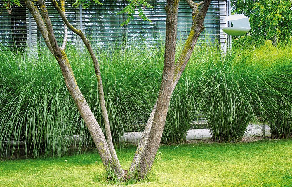 Príjemný charakter záhrady dotvárajú zvolené doplnky vrátane dizajnového závesného kŕmidla.