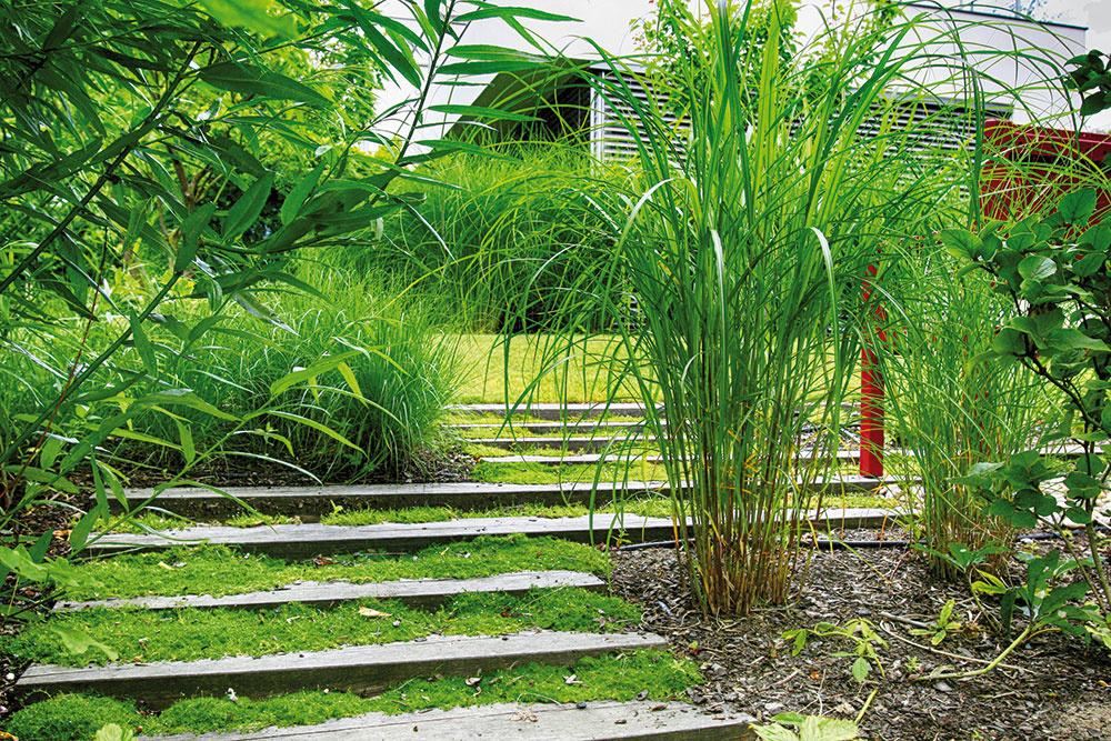 Okrasné trávy výborne zapadajú do konceptu minimalistickej záhrady. Nižšie druhy reprezentuje kostrava či ostrica, vyššie perovec, smlz aozdobnica.