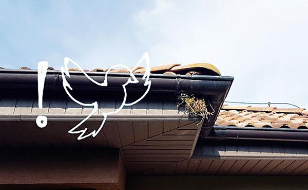 Seriál: Čo očakáva zákazník od strechy? Nech sa do nej nedostanú vtáky ani kuny!