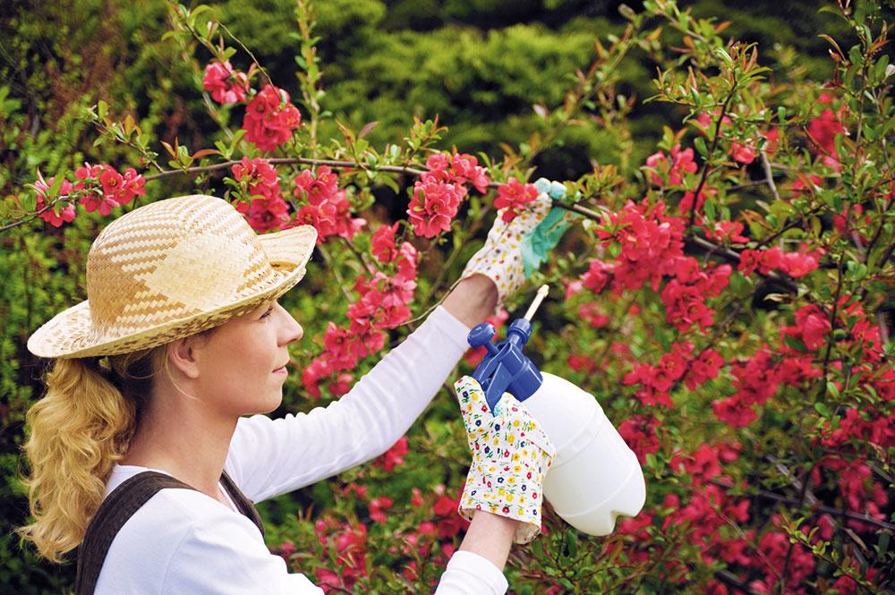 Ochrana rastlín na začiatku leta