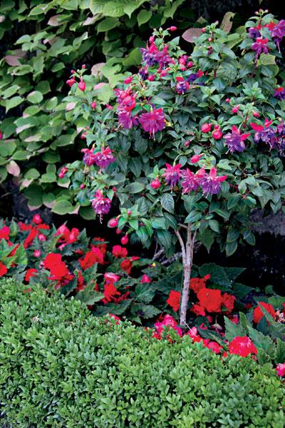 Vyžeňte nudu a chaos z úzkej záhrady
