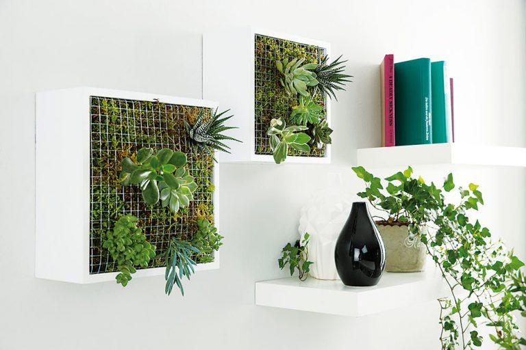 Ako z jednoduchých poličiek vytvoriť záhradu na stene?