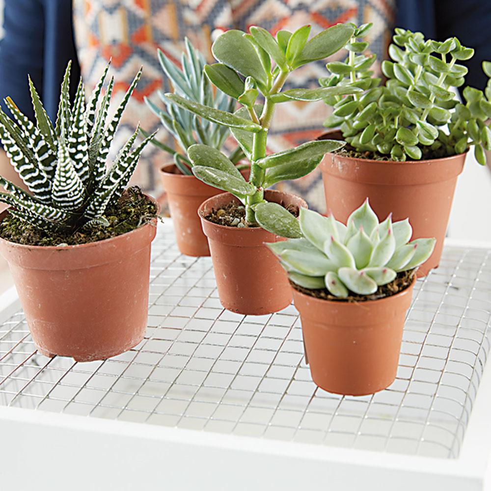 7. VÝBER RASTLÍN Nakúpime si vhodné rastliny, napríklad skalné ruže. Dôležité je, aby ich nebolo treba pričasto zalievať.