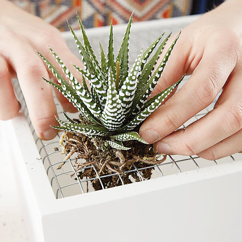 """9. """"SADENIE"""" Otvory nesmú byť príliš veľké, aby znich rastliny nevypadli. Všetky rastlinky správne uložíme."""