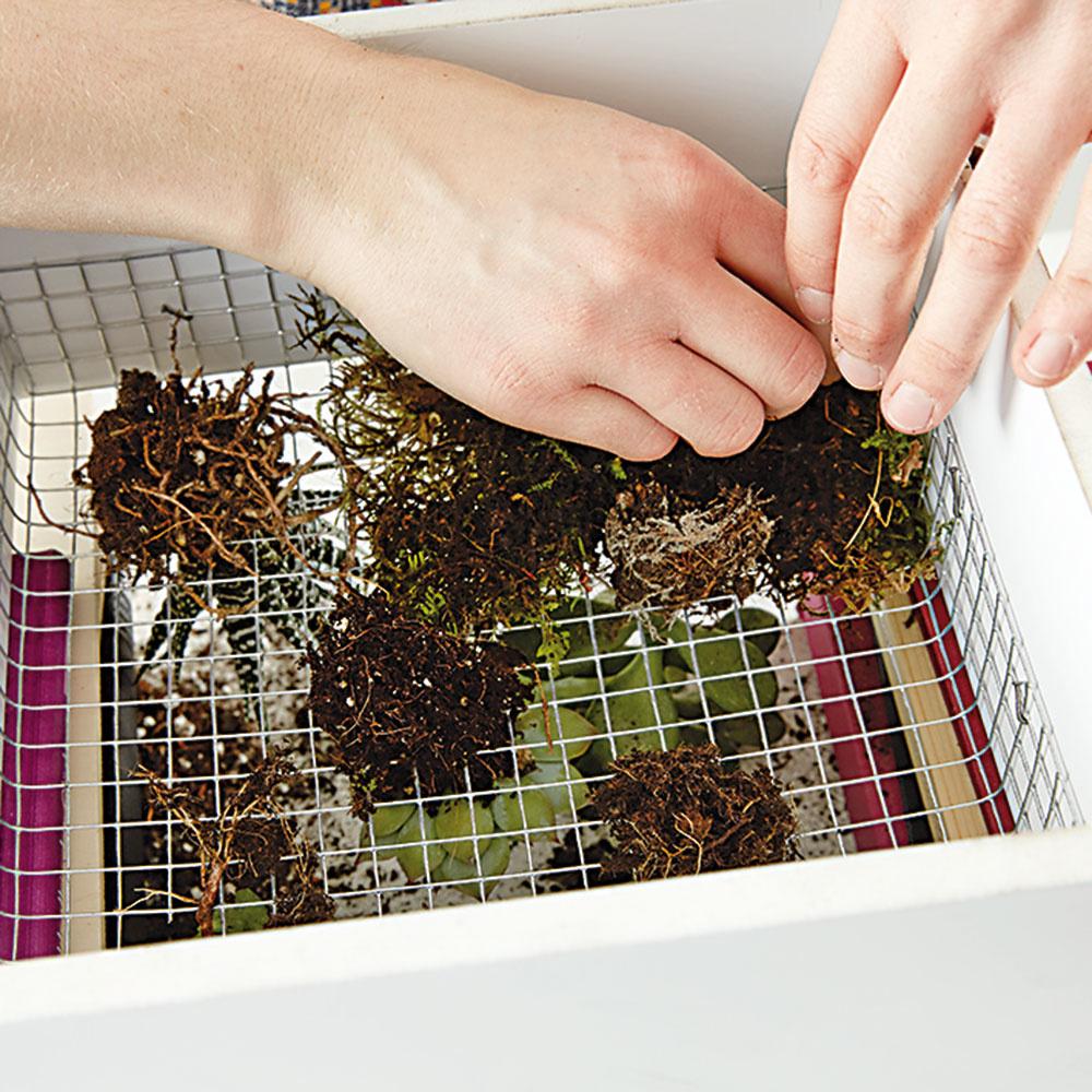 10. MACH Celý regál opatrne otočíme mriežkou nadol, aby sme rastliny nepoškodili. Na pletivo ztejto strany uložíme mach koreňmi nahor.