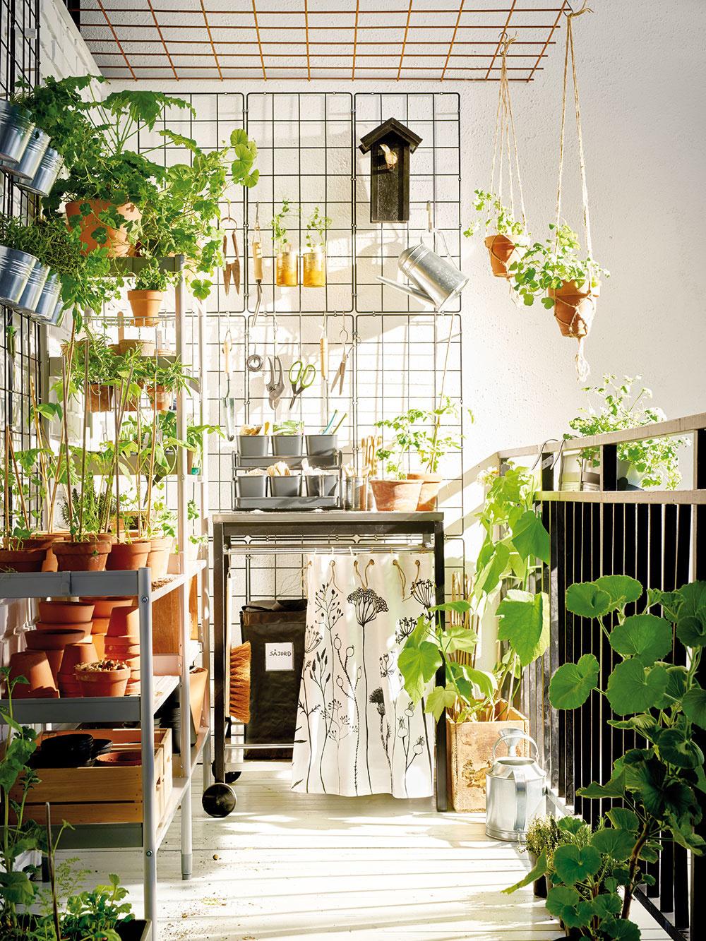 Kto by nemal rád jahody? Pestovať ich možno aj na balkóne. Stačí zvoliť správny kultivar, vybrať vhodnú nádobu apoužiť substrát určený na ich pestovanie. Anezabudnite ich pravidelne zavlažovať. Pri pestovaní zelene na balkóne vám pomôžu využiť priestor aj do výšky regály alebo kovové siete, ktoré pripevníte na stenu.
