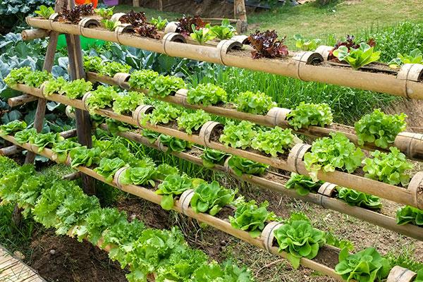 Záhony trochu inak: Vytvorte rastlinám zaujímavejšie prostredie