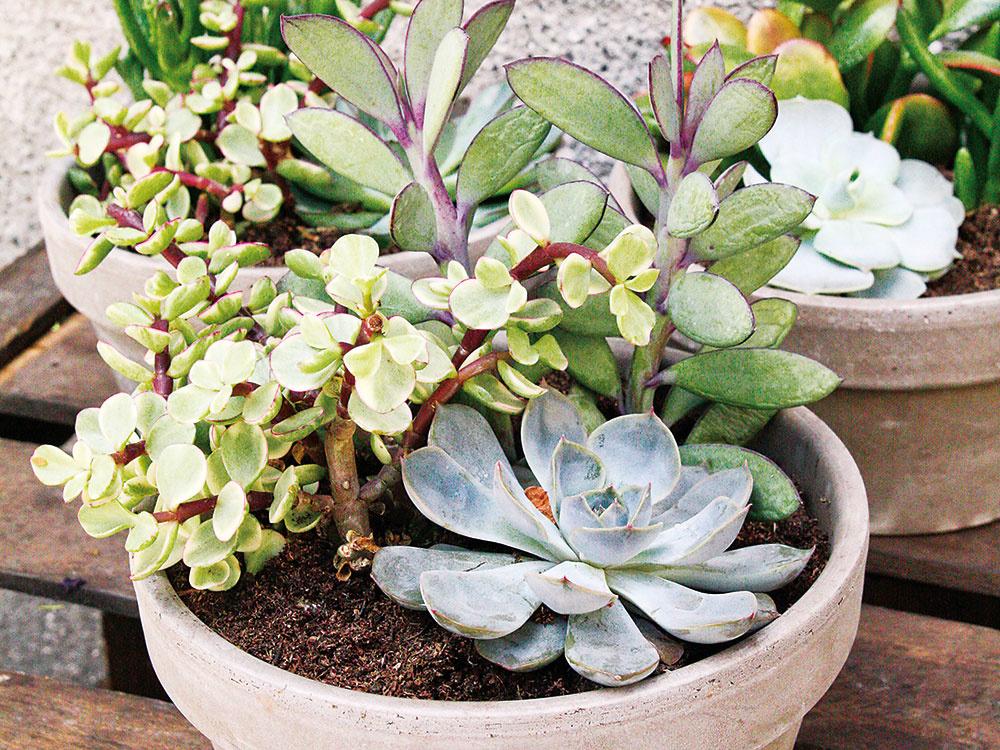 Ako si vytvoriť sukulentnú záhradku na slnečnú terasu