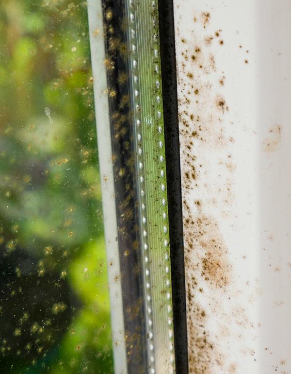 Problém chorých budov: Para z domácich spotrebičov môže dopomôcť k nebezpečným hubám