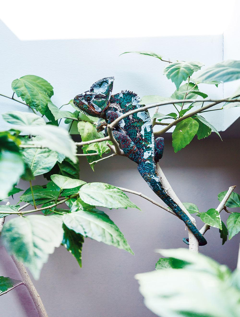 Dobre zamaskovaný najmenší obyvateľ domu – Pascal.
