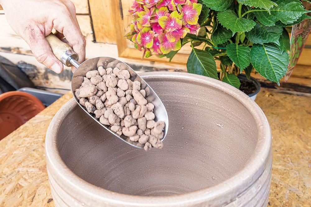 Na dno dostatočne priestrannej vegetačnej nádoby navrstvite keramzit vo výške aspoň 5 cm. Zabránite tým hromadeniu vlhkosti v blízkosti koreňov.