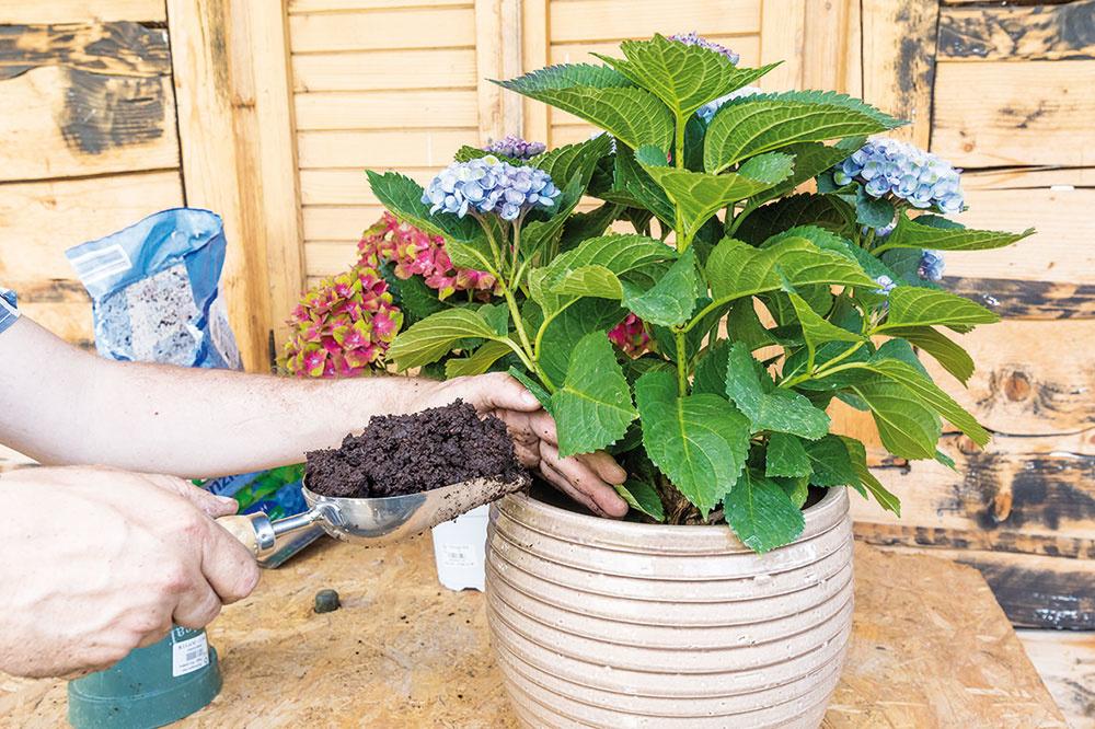 Prisypte zvyšný substrát a dôkladne ho utlačte okolo rastliny aj po okrajoch nádoby. Podľa potreby dosypte ďalší, nádobu ale nenaplňte až po horný okraj. Skomplikovali by ste si zalievanie.