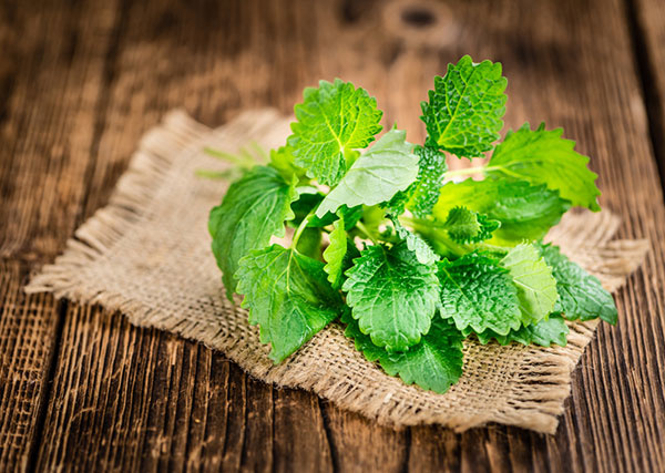 Rozvoňajte si byt bylinkami s vôňou citrusov: medovka, muškát citrónový, verbéna