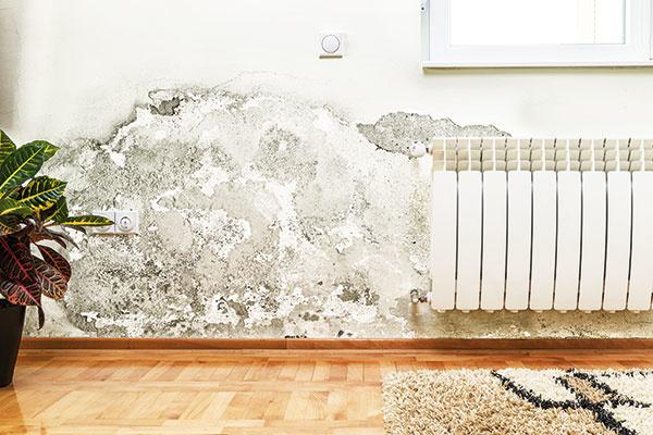 Častý problém starších domov: Ako vysušiť vlhké múry?