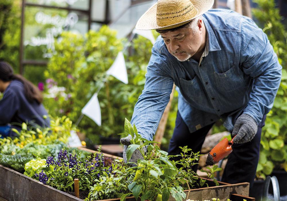 Záhradník je ten, ktorý vám to celé napokon doladí, pomôže skúpou rastlín, zasadí ich apravidelne vám ich môže upravovať. Zvoľte teda správne, akého špecialistu vakej fáze budete potrebovať, aby ste predišli sklamaniu znesprávnych očakávaní.