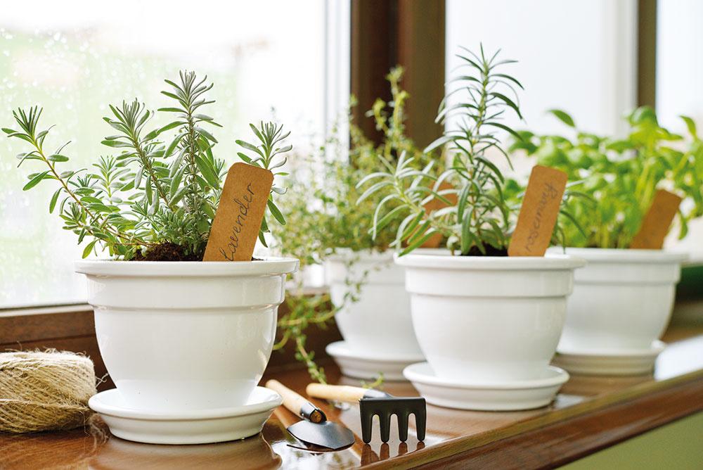 Vypestujte si bylinky proti chrípke aj na okennom parapete