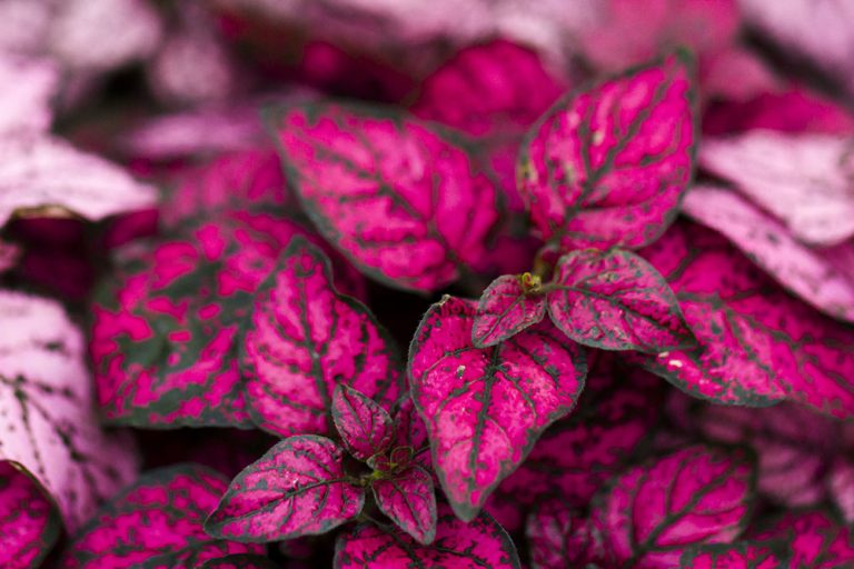 Nenáročné izbové rastliny, ktorých pestovanie zvládne každý