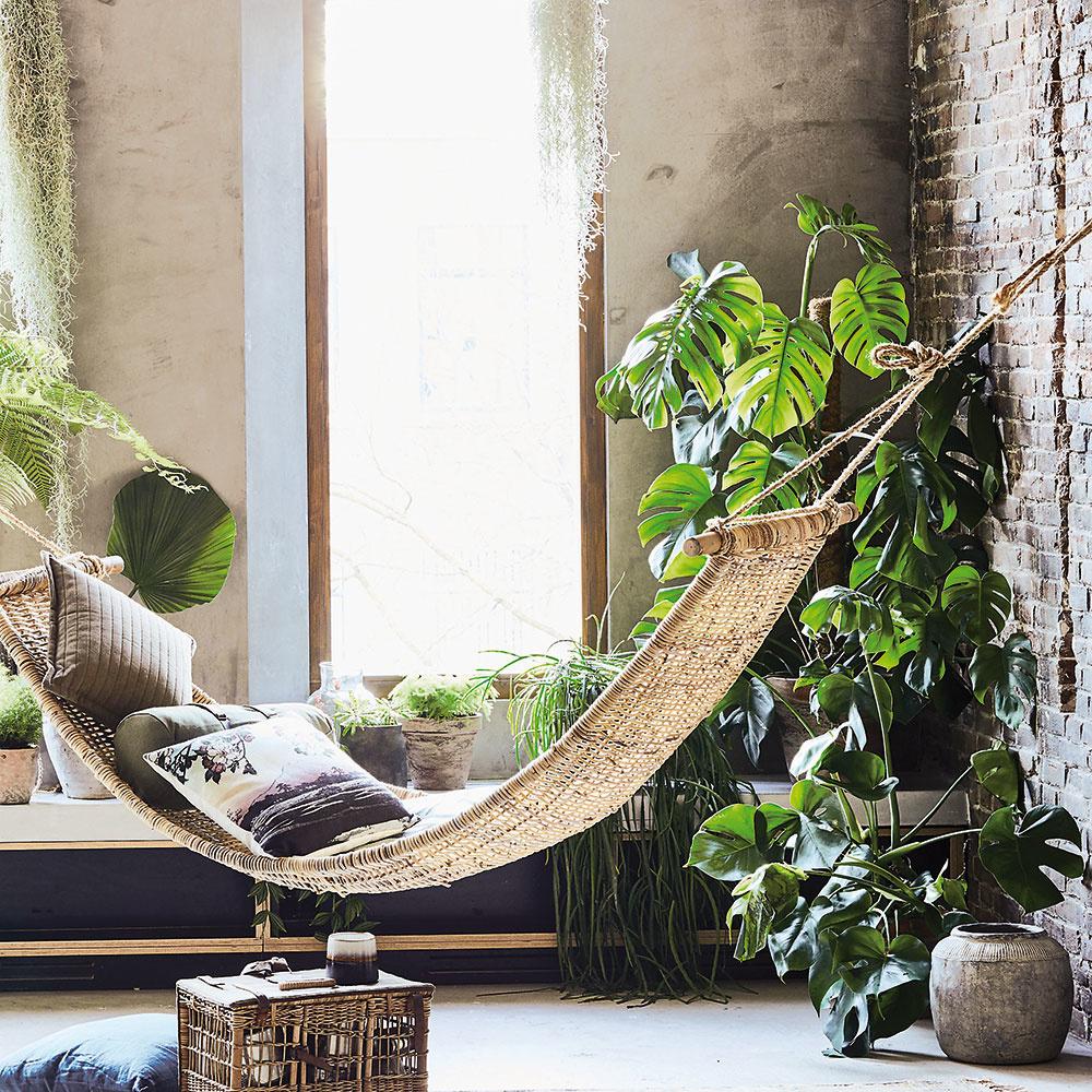 MONSTERA SKVELÁ Je stálicou medzi izbovými rastlinami. Táto pútavá rastlina sa hodí do veľkých miestností aj do tmavých kútov, darí sa jej vchladnejších izbách aneprekáža jej ani silnejšie prúdenie vzduchu. Je prirodzene popínavá, takže sa nezľaknite, ak sa svojimi vzdušnými opornými koreňmi začne šplhať po vašej stene. Monstera je dlhoveká rastlina, dorastá do zaujímavých tvarov arozmerov. Pokiaľ však už dosiahne strop, je lepšie ju zrezať. Umiestnenie: polotienisté stanovište, nie priame slnko Polievanie: vlete pravidelná zálievka (pozor, aby vpodložke neostala stáť voda), čím je vyššia teplota, tým viac treba listy rosiť.