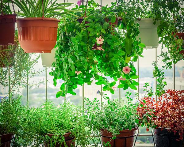 Vytvorte si doma svoj vlastný kúsok prírody – stačí veľmi málo