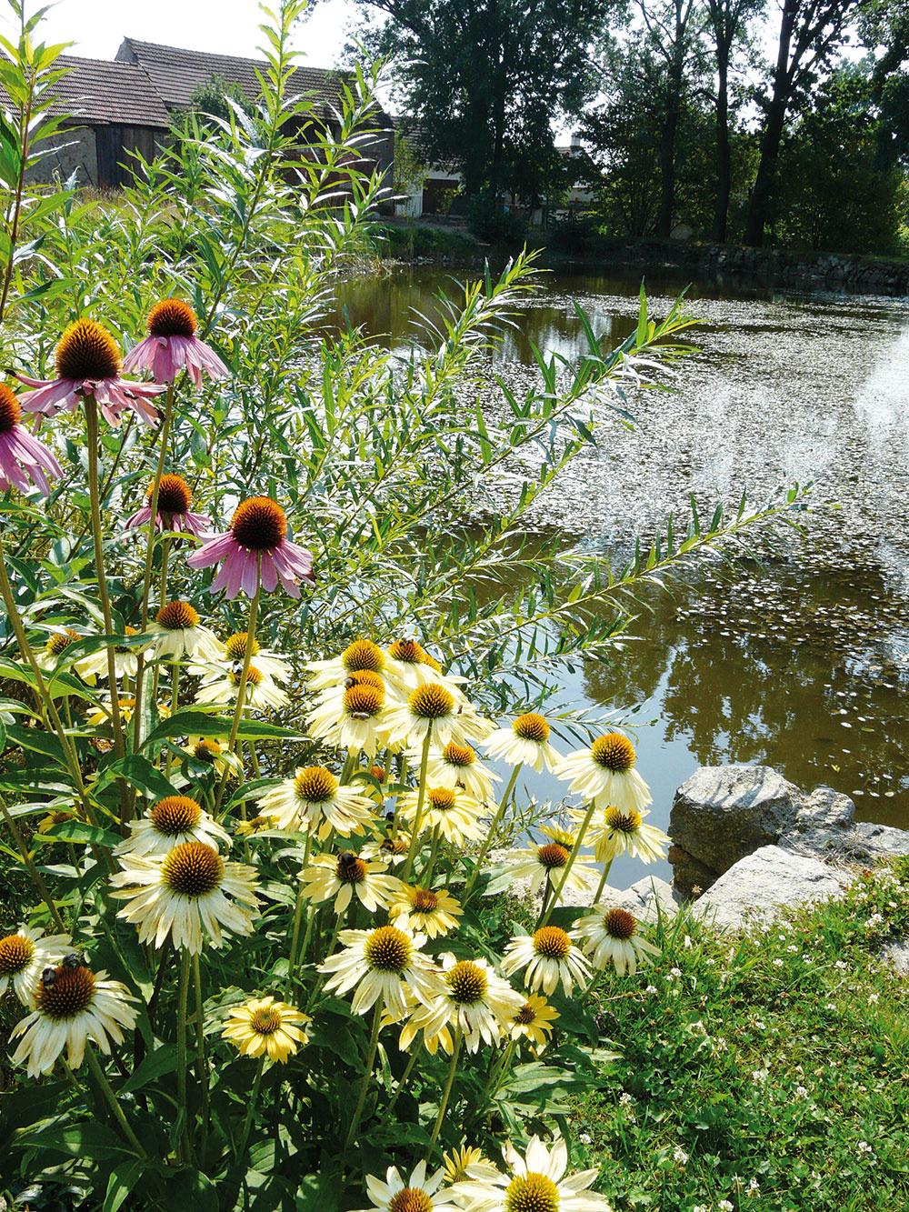 Starý rybník bol pôvodne odsúdený na zánik, ale Gebrovci sa zaslúžili o jeho záchranu. Dnes tu žijú svoj nerušený život vodné živočíchy a hladinu pokrývajú pestré kvety, lekná a leknovce.