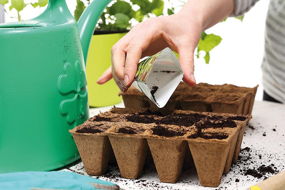 Ako si predpestovať vlastné sadeničky