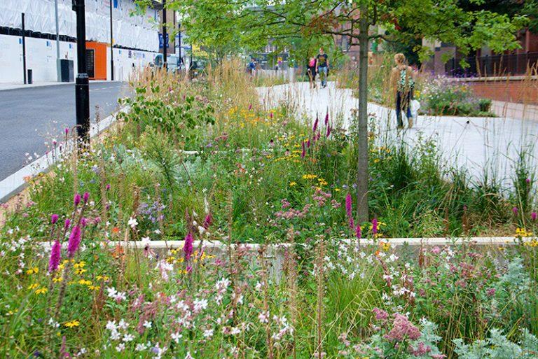 Dažďová záhrada: Na čo slúži a ako funguje?