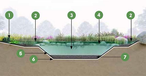 REZ ZÁHRADNÝM JAZIERKOM  1 pobrežná zóna 2 močiarna zóna 3 vodná plocha 4 kamene proti padaniu štrku 5 jazierková fólia 6 geotextília 7 vrstva štrku