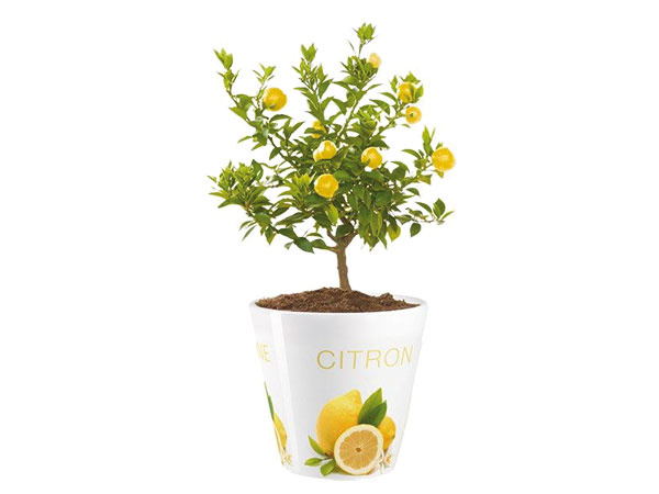 Kvetináč Citrón, priemer 15,5 cm, výška 14,5 cm, keramika, 18 €, www.bsstyle.sk