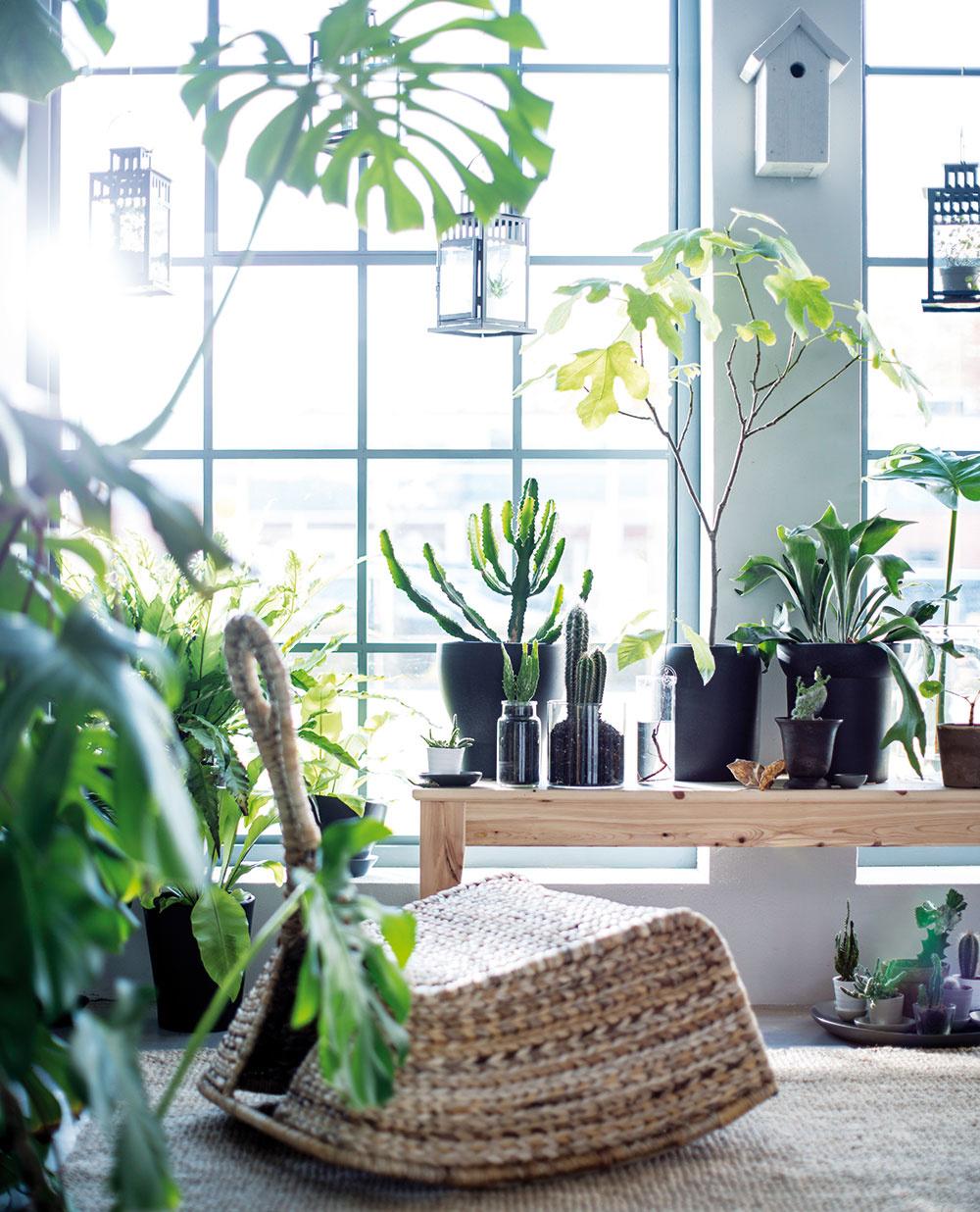 Otvorené priestory  Chcete rozčleniť otvorený priestor avytvoriť vňom útulný kútik? Stavte na rastliny avytvorte si pravú oázu pokoja, kde si sradosťou prečítate knihu alebo vtichosti vypijete rannú kávičku. Navyše tým, že budete mať rastliny na očiach, hneď zistíte, kedy ich treba poliať.