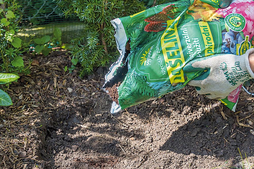 Na miesto výsadby nasypte čistú rašelinu, ktorá vám pomôže vytvoriť ideálne pôdne podmienky – kyslú pôdnu reakciu a vzdušný pôdny profil.