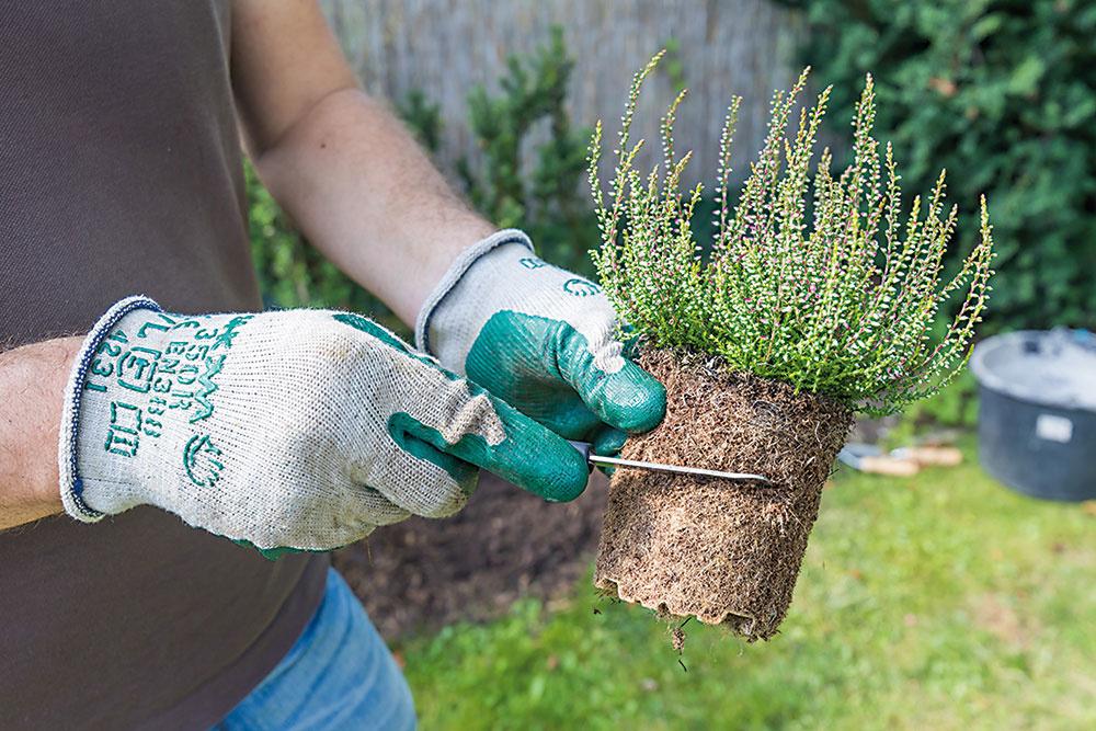 Navlhčené koreňové baly po obvode narežte ostrým záhradníckym nožom. Podporíte tým ich lepšie zakorenenie.