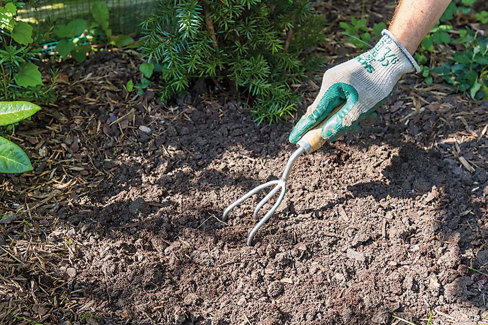 Rašelinu dôkladne premiešajte s časťou pôvodného substrátu, nie je totiž dobré sadiť priamo do čistej rašeliny.