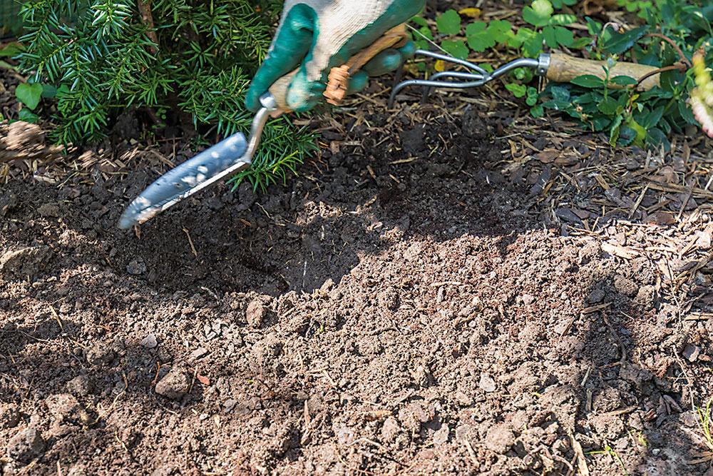Pomocou záhradníckej lopatky vyhĺbte neveľké jamky. Dávajte pozor, aby neboli príliš plytké.