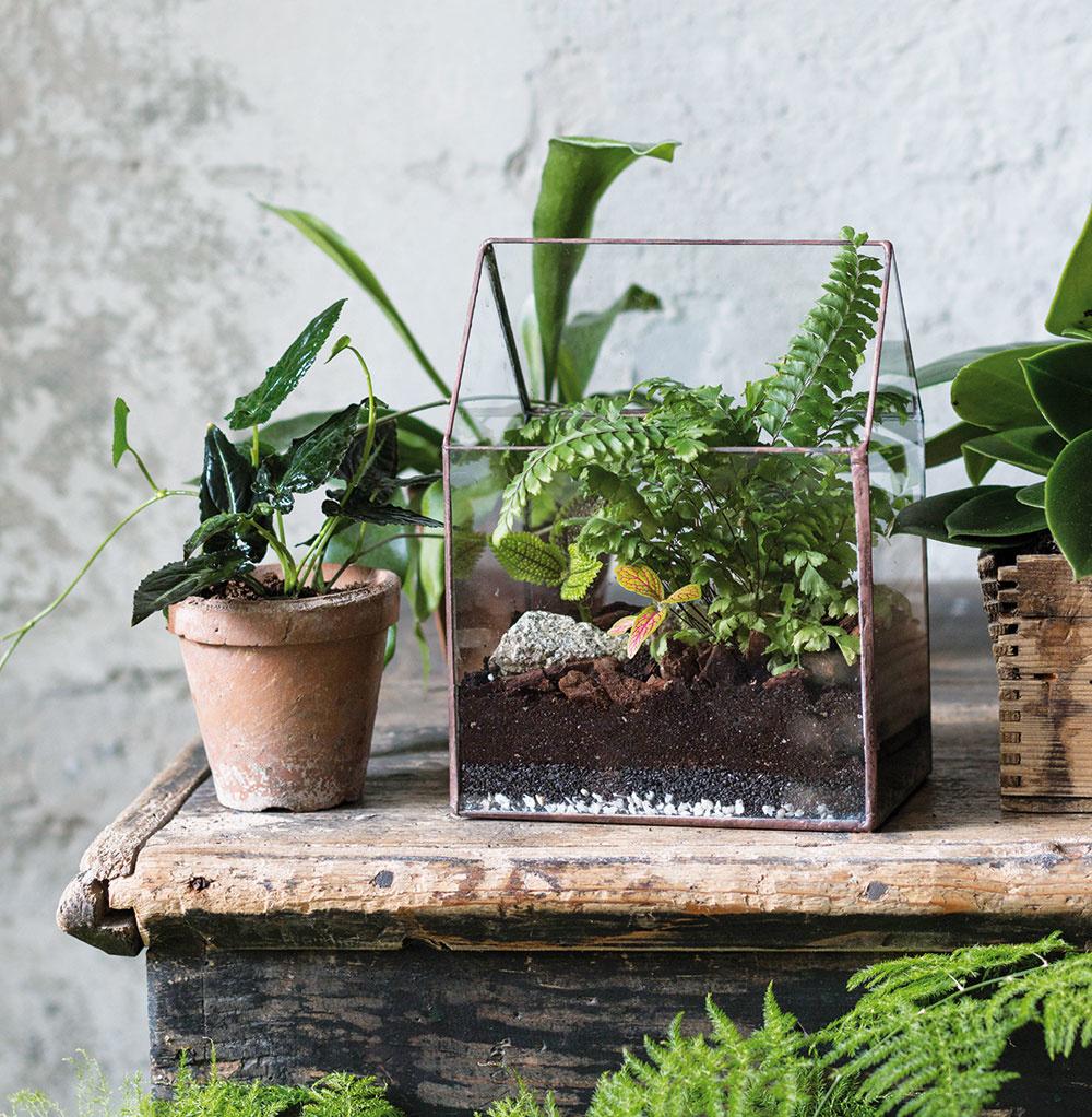 V útulnom domčeku býva vždyzelená papraď adiant (Adiantum pedatum),fitónia (Fittonia albivenis cv.), pilea (Pilea mollis), kamienok z lesa. Fitónie pochádzajú z dažďových pralesov. Terárium osviežia svojou záplavou drobných pestrých lístkov.