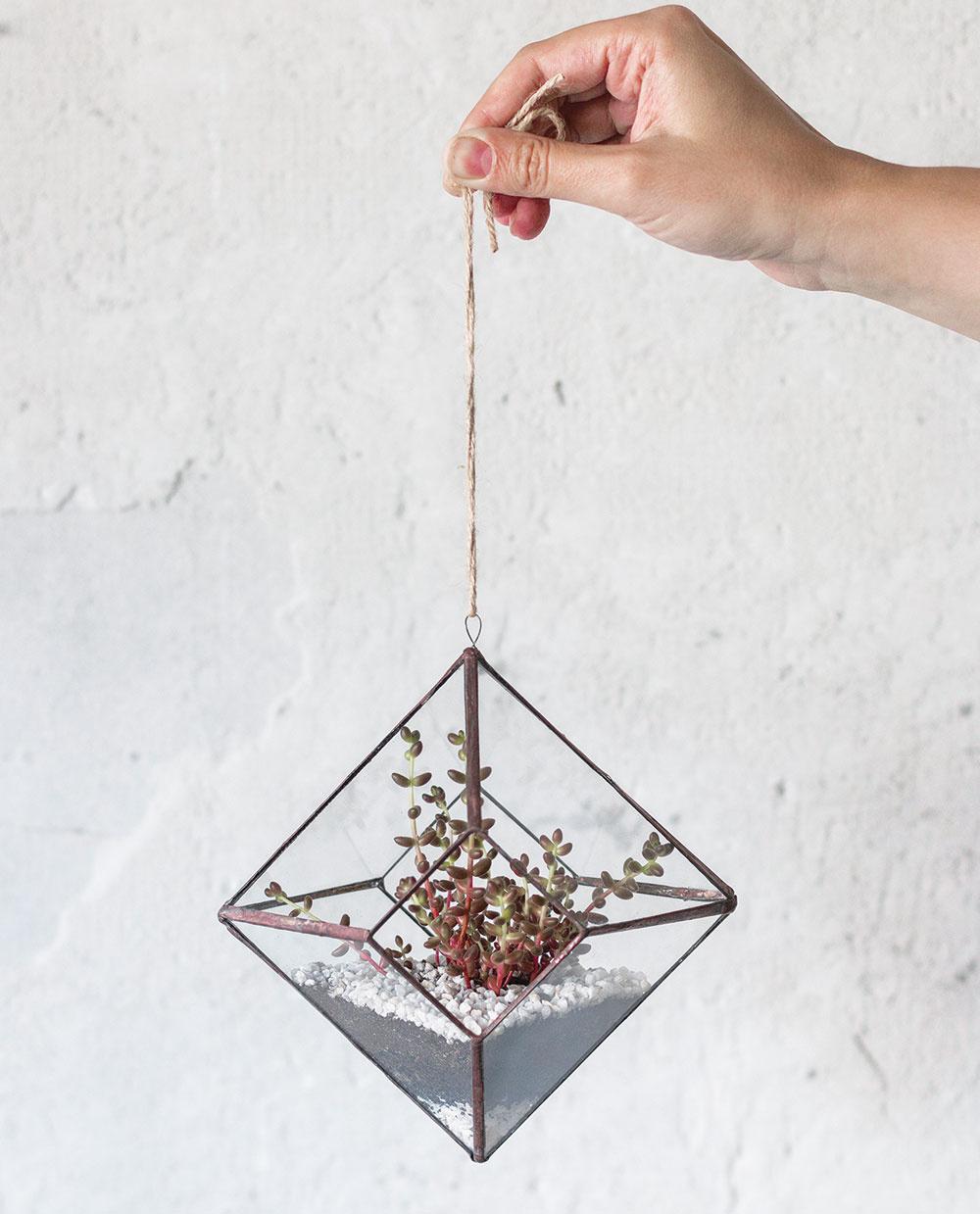 Minimalistické závesné terárium v tvare diamantu, v ktorom vynikne jeden solitér, napríklad sukulent rozchodník (Sedum rubrotinctum).