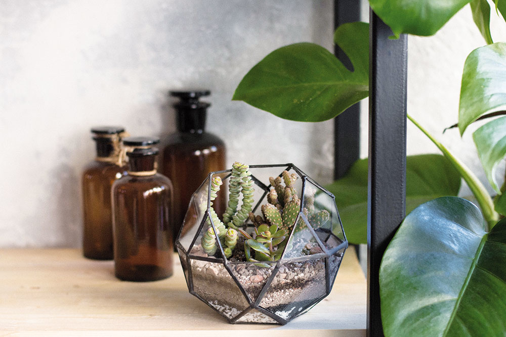 Izbové terária – záhradka v skle