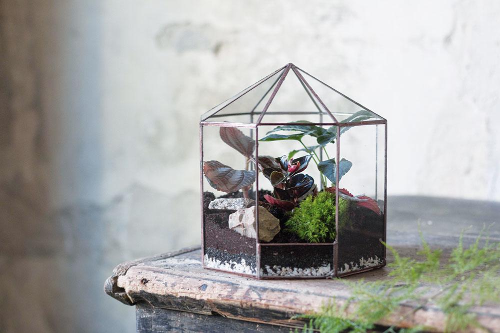 """Rozkošné šapitó je naplnené syngóniom (Syngonium wendlandii), pileou (Pilea spruceana """"Norfolk""""), peperómiou (Peperomia metallica), machom (Bryophyta), kamienkom z lesa."""