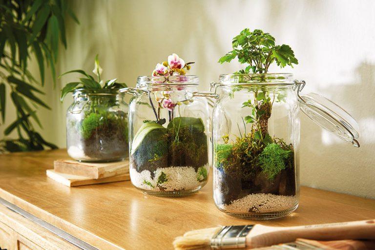 Rastlinné terárium ako bytová záhradka
