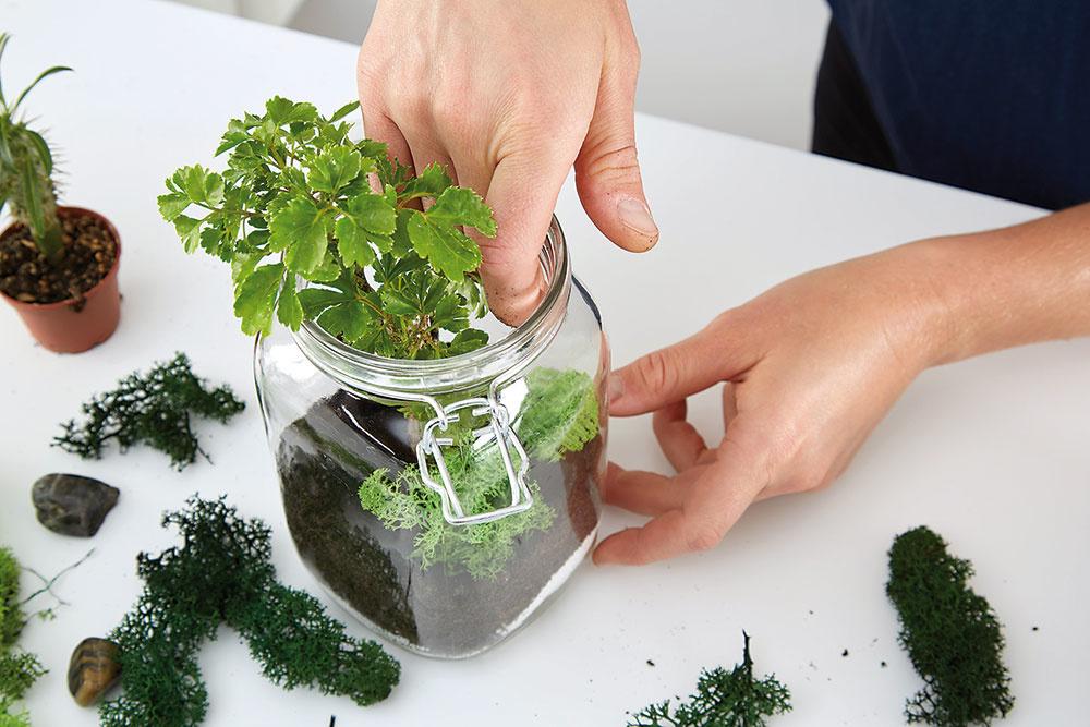 Ak je nádoba dosť veľká, môžeme kombinovať viacero druhov. Potom starostlivo pokryjeme korene zeminou.
