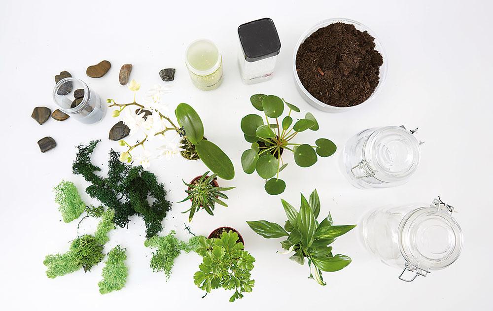 Budeme potrebovať nádoby, rastlinky (skalničky, kaktusy, orchidey…), kamienky, dekoratívny štrk alebo piesok, mach, zem.