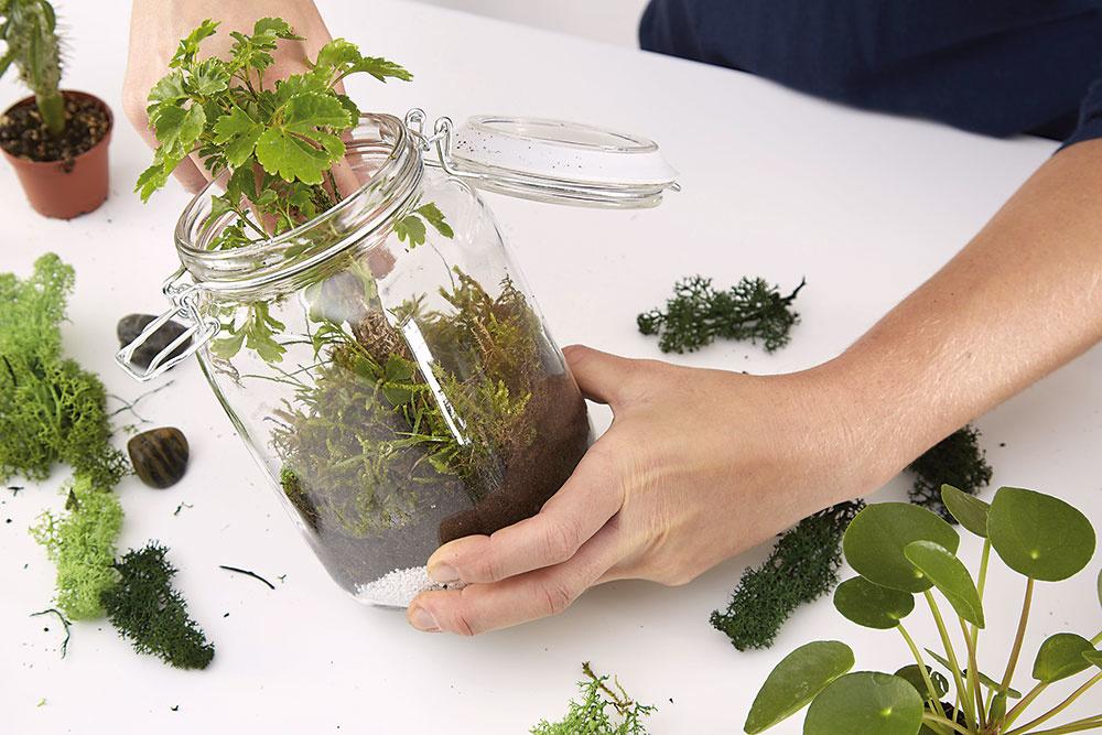 Rastlinky by nemali byť v nádobe vedľa seba príliš natesno, pretože niektoré ešte poriadne vyrastú. Nasleduje vrstva machu.