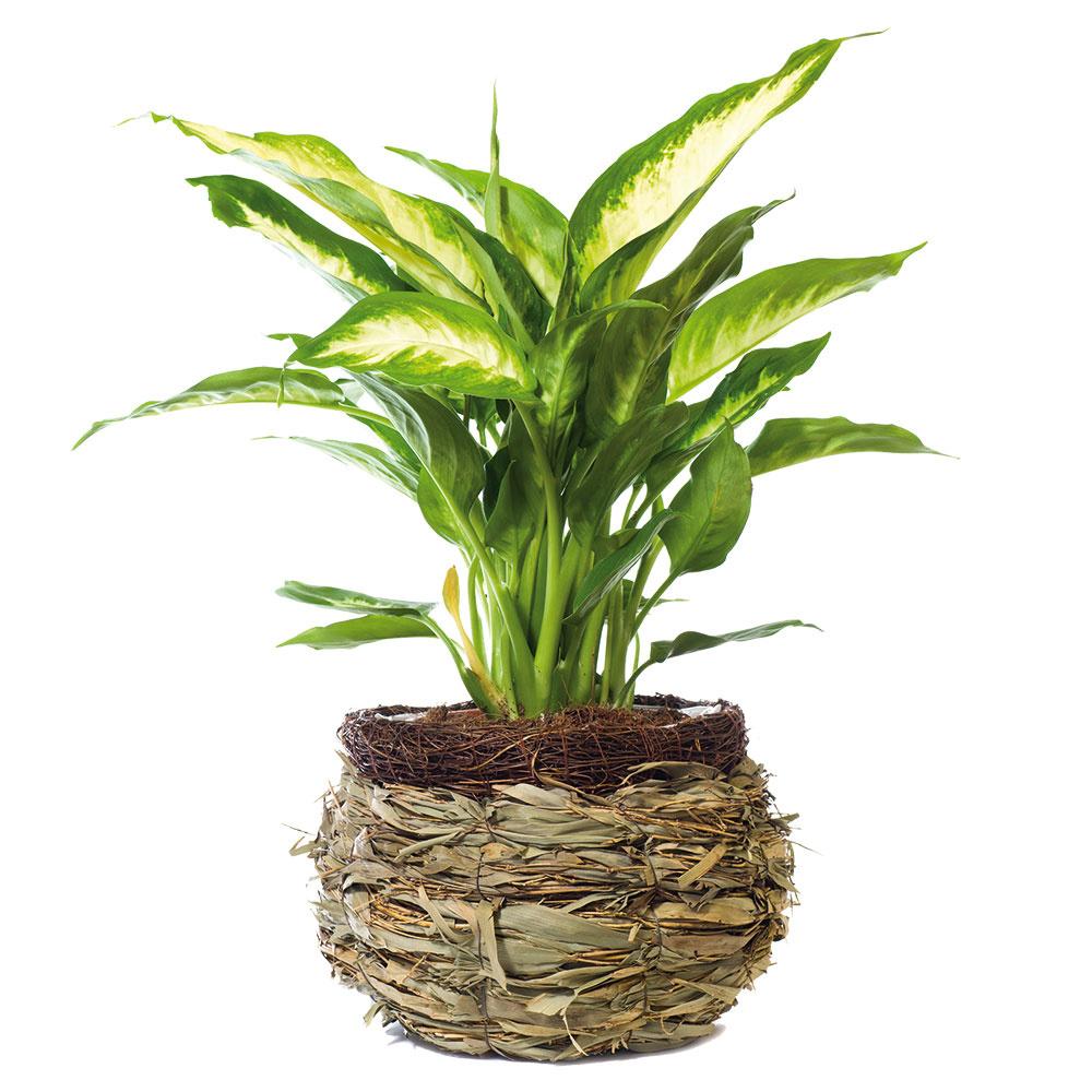 Nenáročné izbové rastliny, ktoré vám odpustia aj malé prehrešky
