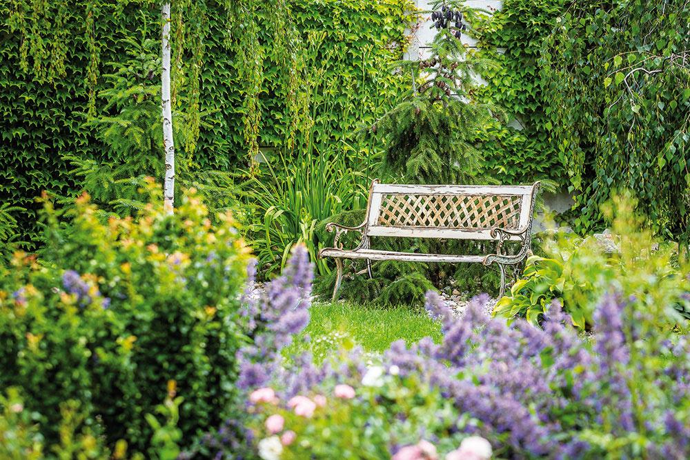 Betónový plot účelne prekrýva pavinič, ktorý má výborné krycie schopnosti. Nájdete tu aj celú zbierku zaujímavých drevín: previsnutú brezu, smrek, vŕby, borovice, liesku, budleju amnoho ďalších.