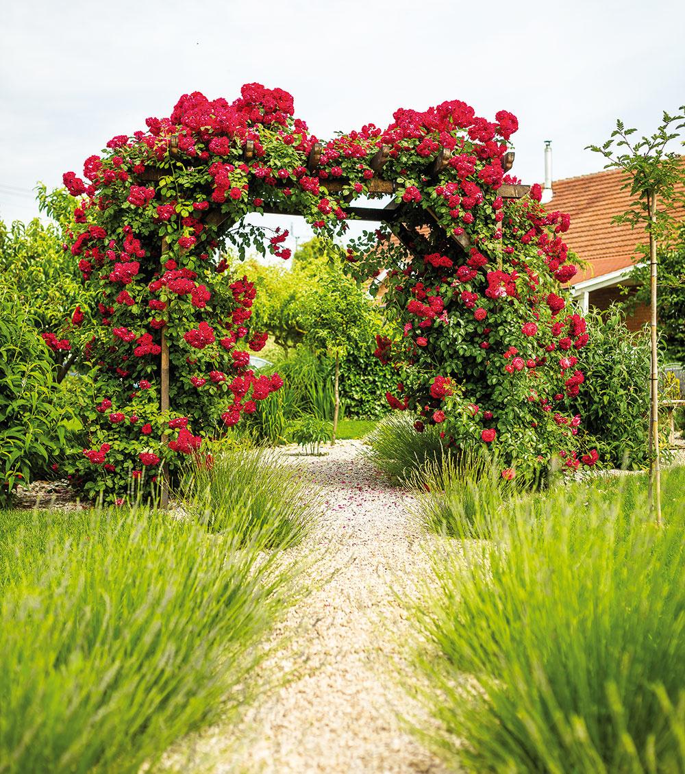 """Rôzne druhy ruží sú po celej záhrade. """"Popínavé sú od starkej – pestovala ich už prababička,"""" odhaľuje Danka. Staré korene niekoľkokrát po záhrade presádzala, pretože im hľadala to správne miesto. Teraz tvorí ružami obrastená pergola a levanduľou lemovaný chodník vchod do úžitkovej záhrady."""