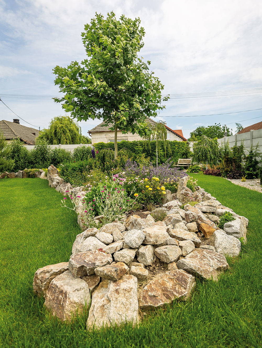 Mladý platan má čestné miesto vcentrálnej časti záhrady, kde má dostatok priestoru na zdravý vývin. Vdospelosti bude nádhernou dominantou. Okolo neho sa vinie dlhý trvalkový záhon, kde je veľké množstvo rôznych kvetín, pôdopokryvných drevín akríkov nízkeho vzrastu.