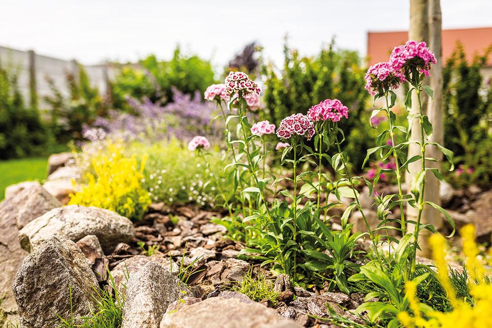 Turecké klince a náprstníky sa tešia obľube majiteľov, pretože krásne kvitnú. Hoci sú to dvojročné rastliny, záhony sú prispôsobené tak, aby sa mohli rozmnožovať, čím zo záhrady nikdy nevymiznú.