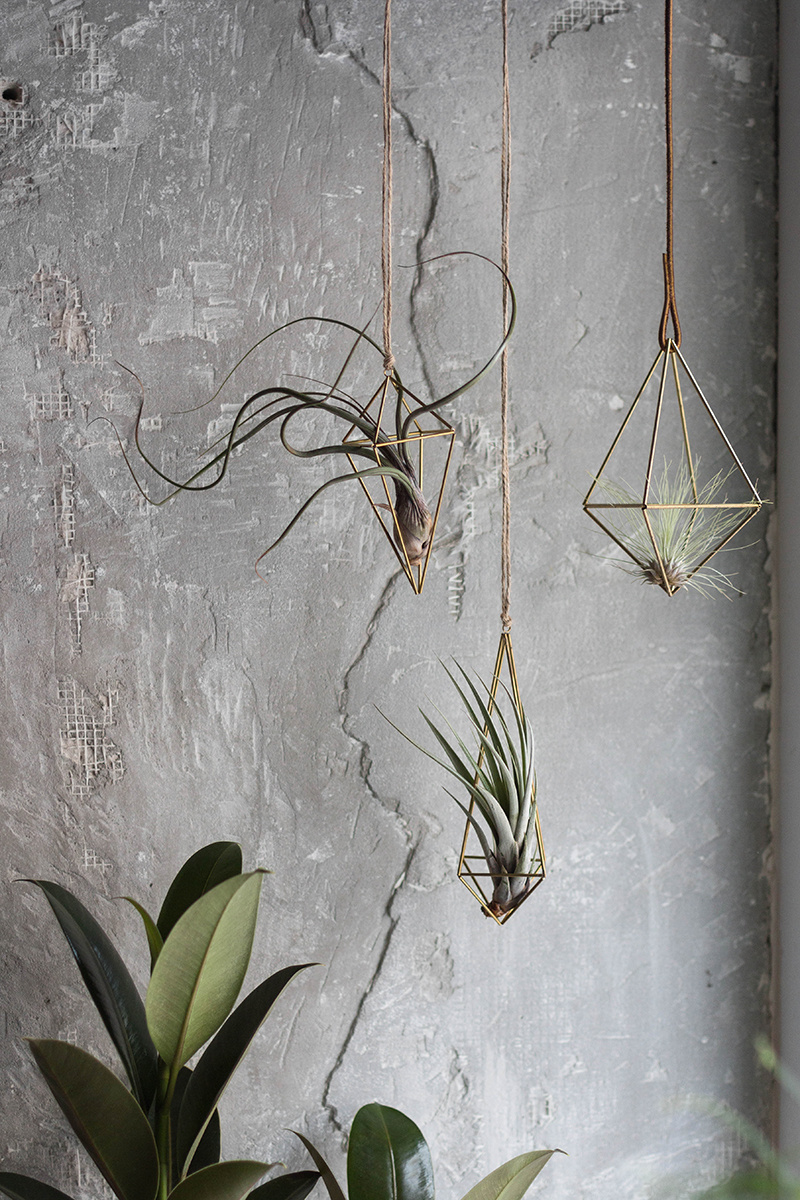 """Himmeli so vzdušnou rastlinkou. Tieto subtílne geometrické """"klietky"""" sú ako stvorené pre tilandsie. Obľubujú slnečné miesto, preto si ich pokojne môžete zavesiť priamo do okna. V zimnom období, keď je vzduch v bytoch zväčša suchý, je potrebné rastliny rosiť častejšie, a to aspoň každý druhý deň."""
