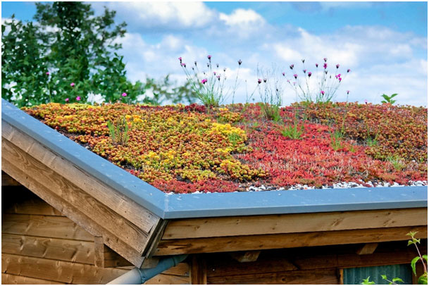 Zelená /vegetačná/ strecha – užitočná krása