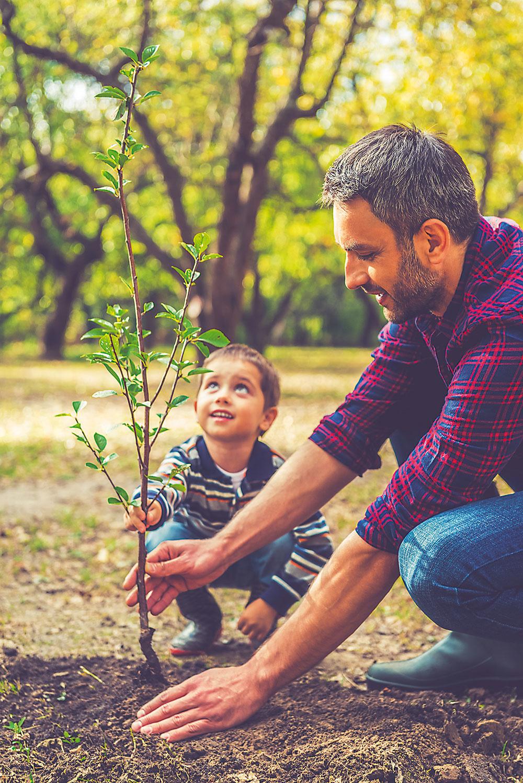Keď zasadíte strom, aj keď je ešte malý, záhrada získa ďalší rozmer, ktorý oči vnímajú veľmi pozitívne. Dávajú mozgu signál, že záhrada nie je až taká malá, keď sa do nej zmestí strom.